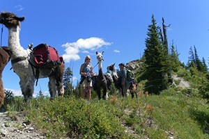 Swan Mountain Llama Treks :: Let docile llamas carry your gear as you hike and explore wilderness around Swan Lake. Perfect for kids & families, we offer 2-hour, half-day, full-and multi-day treks.