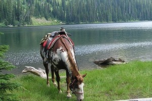 Swan Mountain Outfitters - trips into the 'Bob' :: Swan Mountain Outfitters is northwest Montana's top choice for summer wilderness pack or fishing trips as well as guided hunting trips in the Bob Marshall Wilderness.