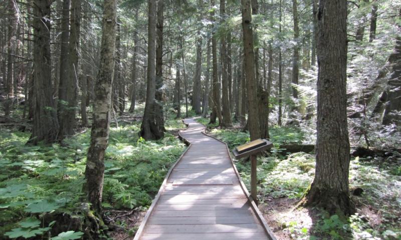 Glacier Trail of the Cedars