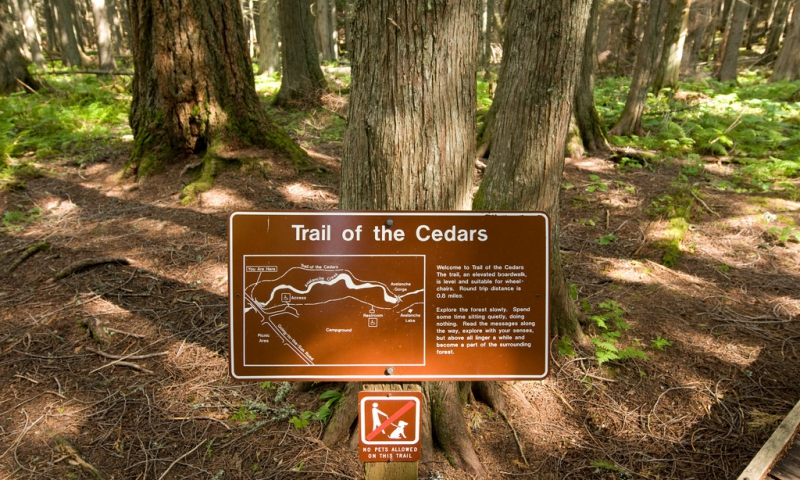 Trails Of The Cedars Nature Trail Glacier National Park