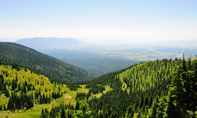 Whitefish Mountain in the Summer