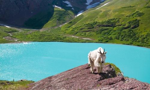 Glacier National Park Tourism Attractions Alltrips
