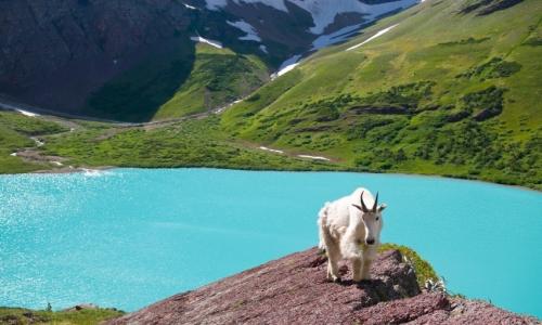 Glacier NP Wildlife