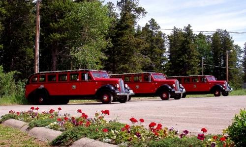 Glacier Park Red Jammer Buses