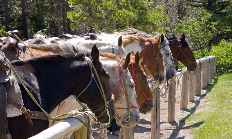Horses ready for a Trail Ride